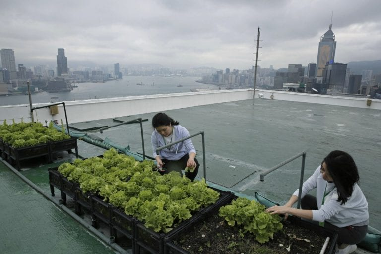 Hong Kong's skyline farms harvest more happiness than food