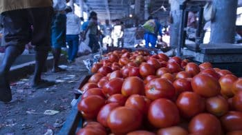 Wholesale inflation rises to 5.28% in October