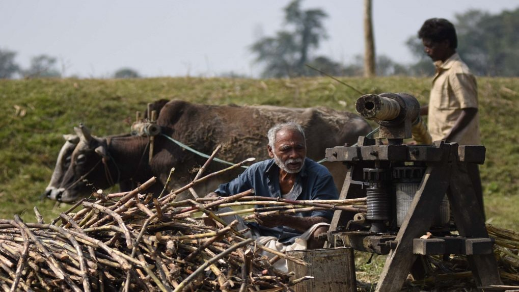 No immediate plans to give subsidy to sugarcane growers, says government