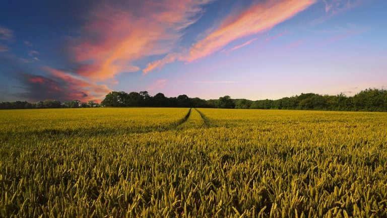 Commodity Corner: Agri ministry in discussion for doubling farmers income