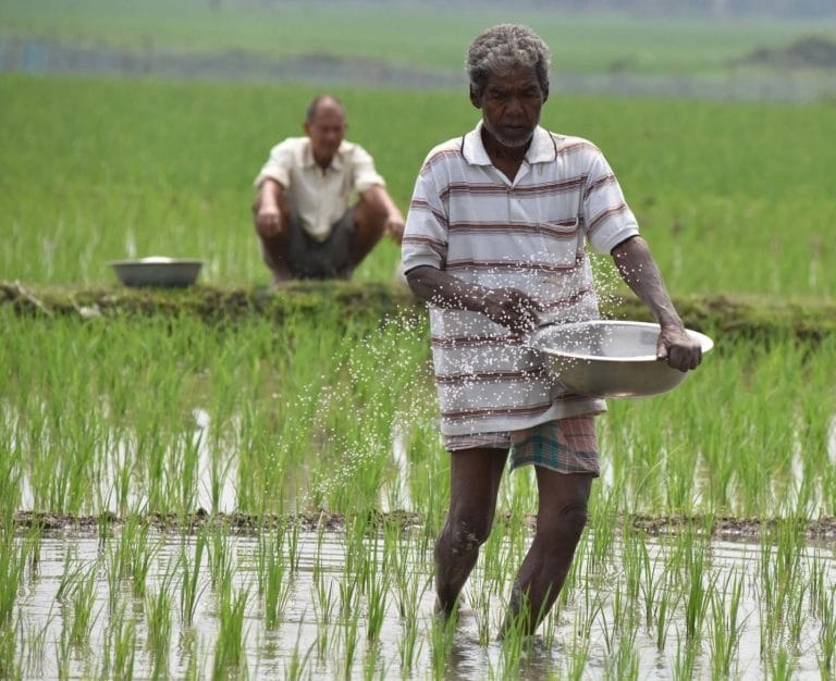 Crisil says 5.25% dip in rabi sowing is worrisome