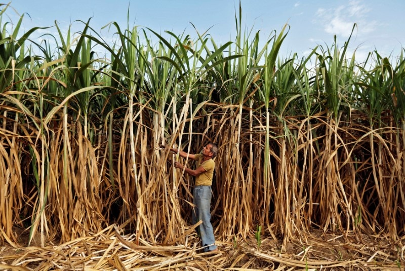 6. Sugar Prices: Sugar prices are expected to remain stable or slightly higher at Rs 34-35 per kg in the coming months following the surplus situation even as the production is likely to fall during 2019-20, according to a report. India will have a supply glut and closing stock of about 13 million tonne of sugar for 2019-20, even if domestic consumption and exports are taken into account, according to Care Ratings report. (Image: Reuters)