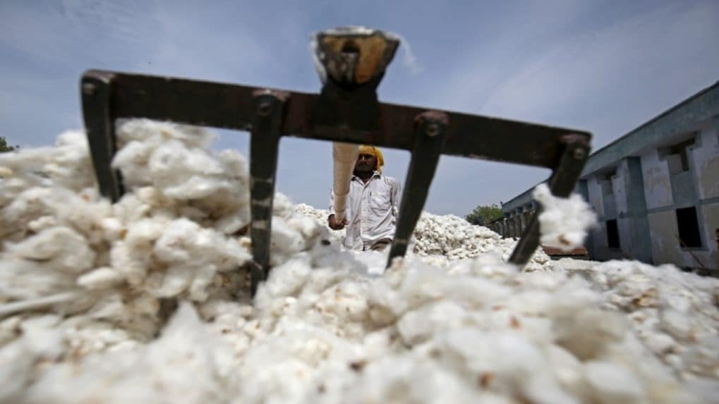 Despite Supreme Court ruling, the saga of Monsanto's Bt cotton seeds is far from over