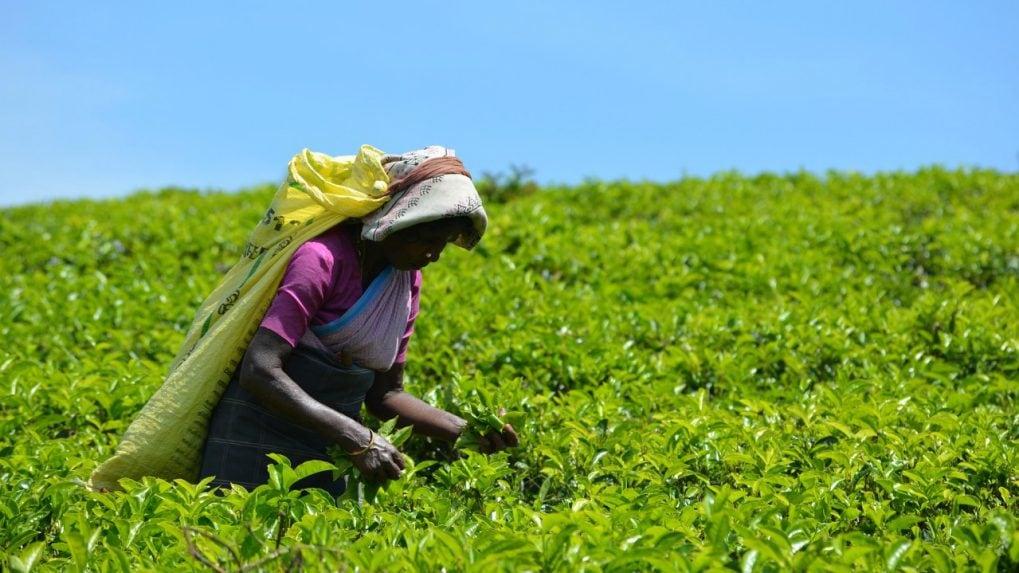 Tea industry going through a weak period, says Jayshree Tea