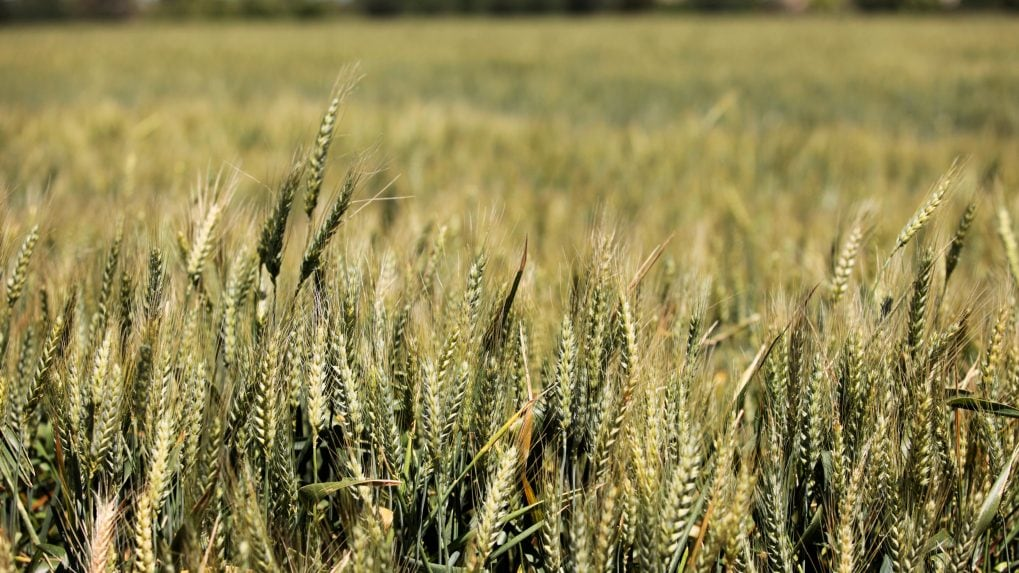Cropin: India's agri-tech solution to world