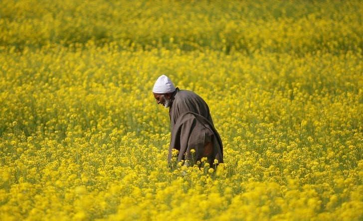 India urges China to drop rapeseed meal import ban amid US-China trade row