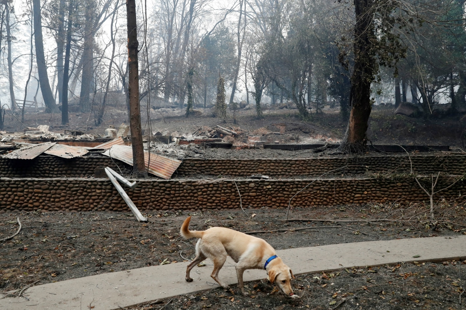 Cadaver Dogs Lead Grim Search For Victims In California Fire