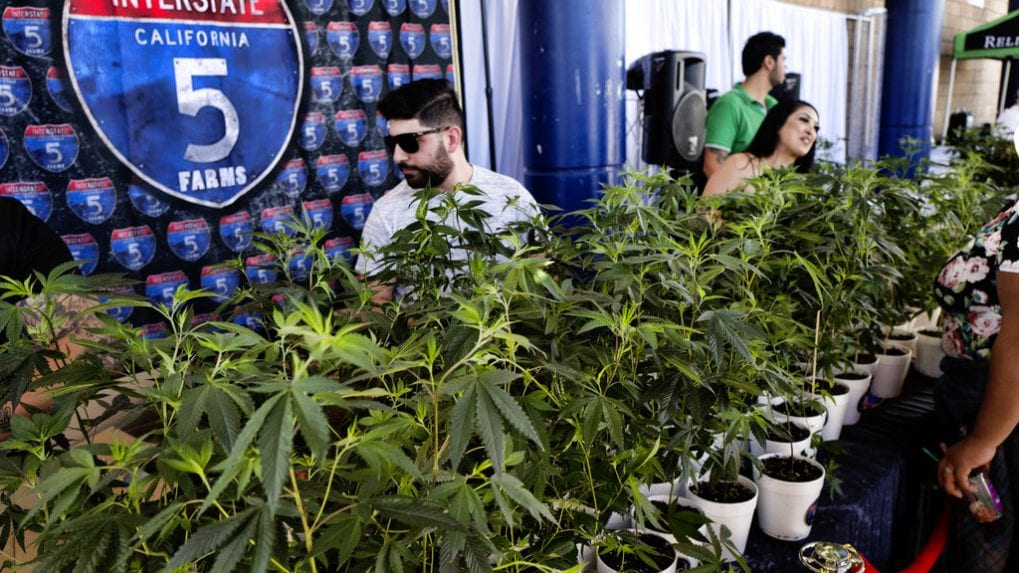 These 23 industries are using marijuana in ways you never thought possible