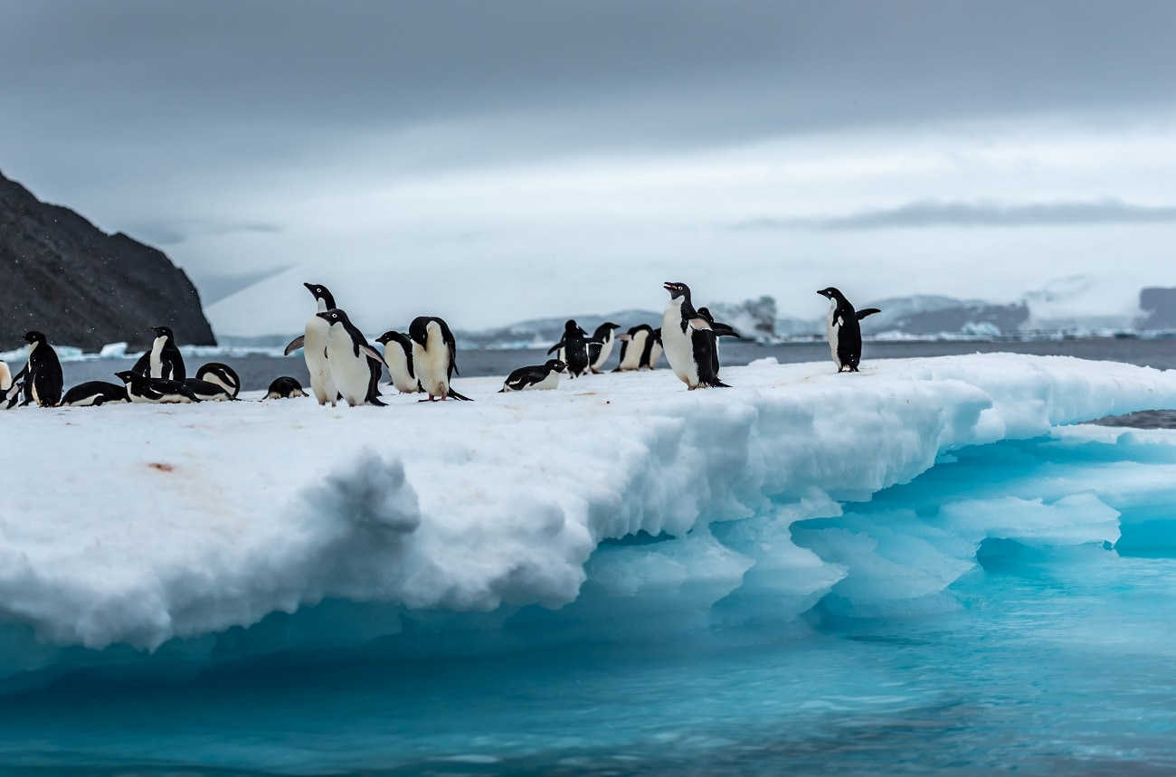 Colony of Penguins on a iceberg.