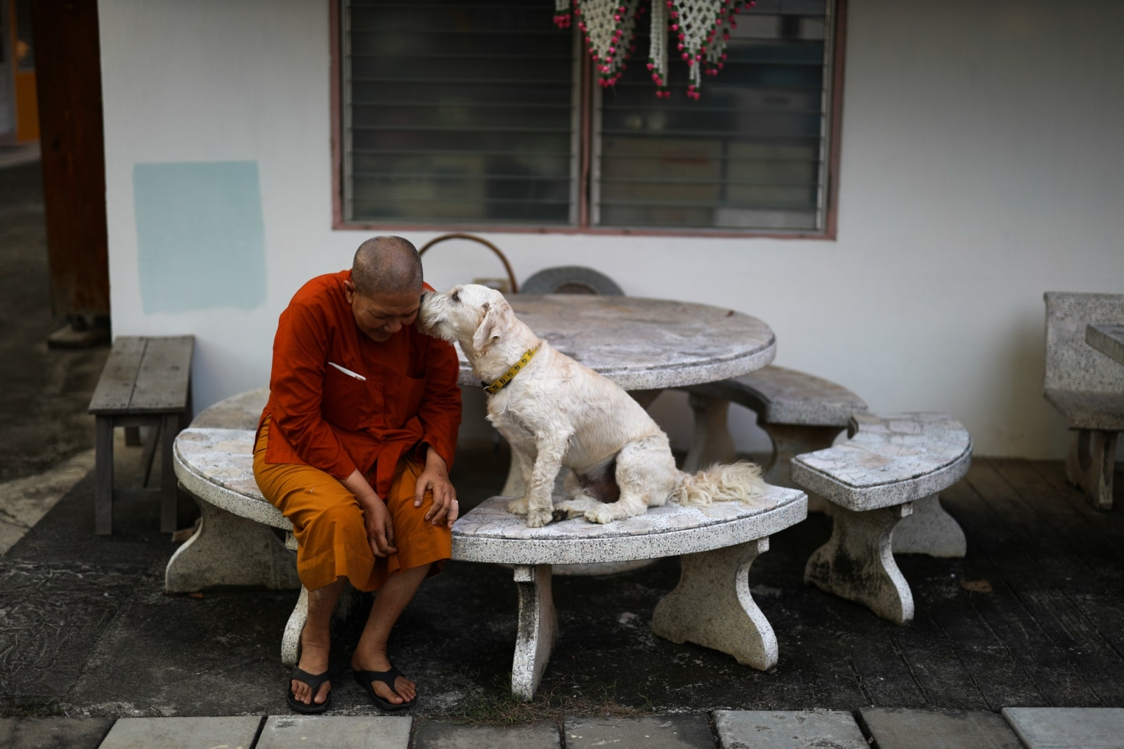 Dhammananda Bhikkhuni, 74, abbess of the Songdhammakalyani monastery, plays with her dog at the Songdhammakalyani monastery, Nakhon Pathom province, Thailand, December 3, 2018. REUTERS/Athit Perawongmetha
