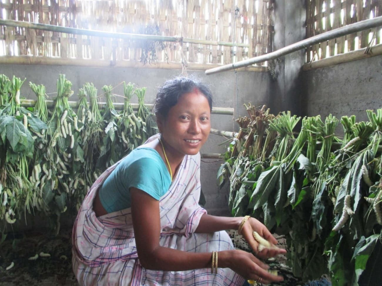 A woman rears silkworms at home in Assam. (HANDOUT/North-East Affected Area Development Society)