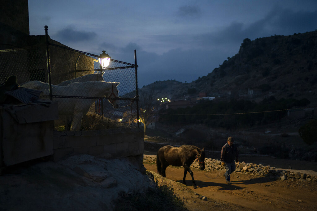 A man walks a horse before a ritual in honor of Saint Anthony the Abbot, the patron saint of domestic animals, in San Bartolome de Pinares, Spain, Wednesday, Jan. 16, 2019. On the eve of Saint Anthony's Day, dozens ride their horses through the narrow cobblestone streets of the small village of San Bartolome during the