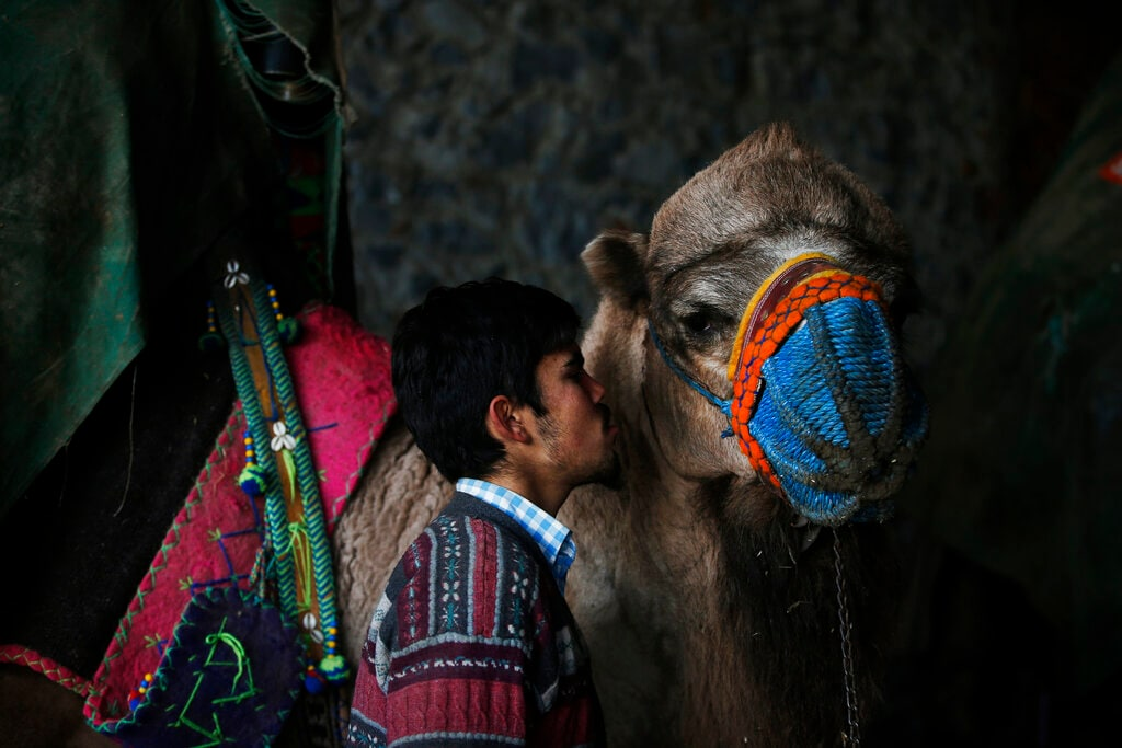 A camel handler kisses his camel prior to a parade. (AP Photo/Lefteris Pitarakis)