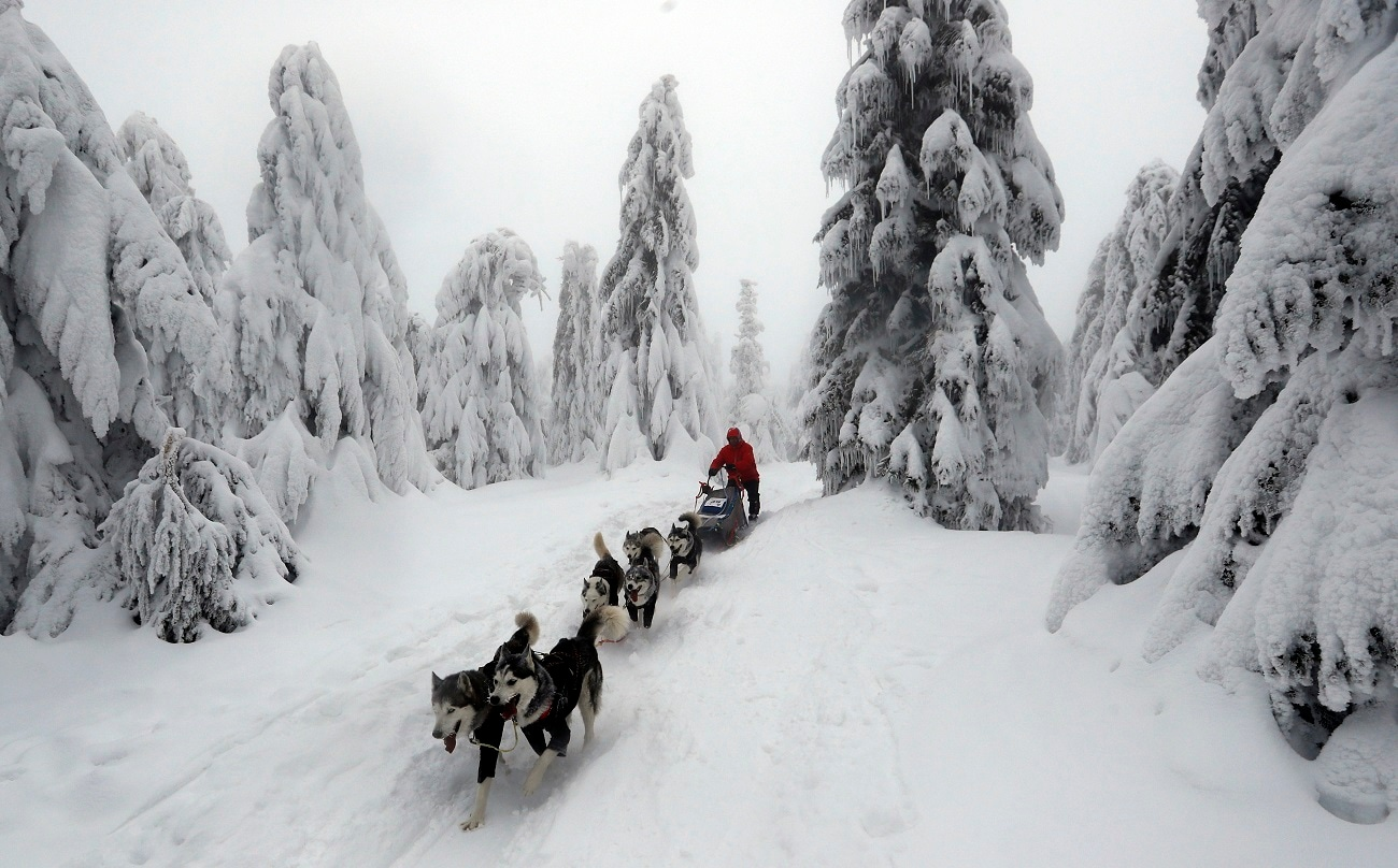 A musher competes with his dogs during the Sedivackuv Long dog sled race. (AP Photo/Petr David Josek)