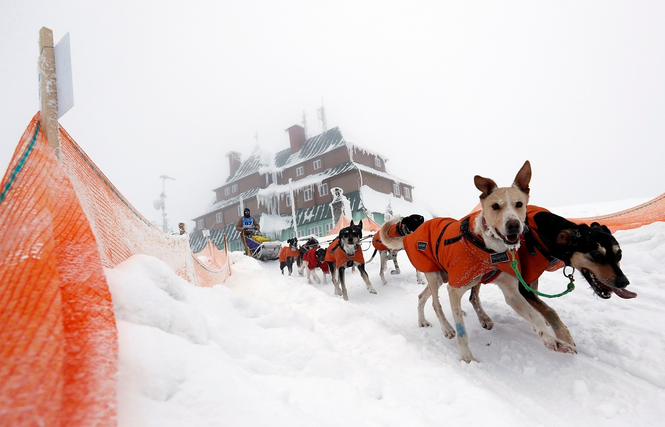 A musher competes with his dogs during the race. (AP Photo/Petr David Josek)