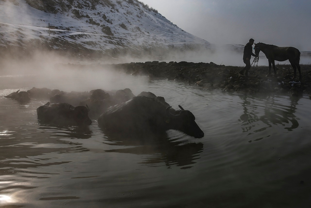 Buffaloes bathe in a hot spring near the village of Budakli, in the mountainous Bitlis province of southeastern Turkey. (AP Photo/Emrah Gurel)