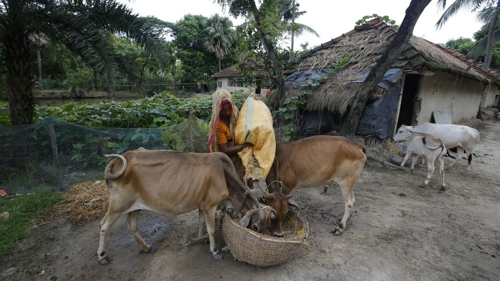 Modi govt's to hold first online exam on 'cow science' on February 25