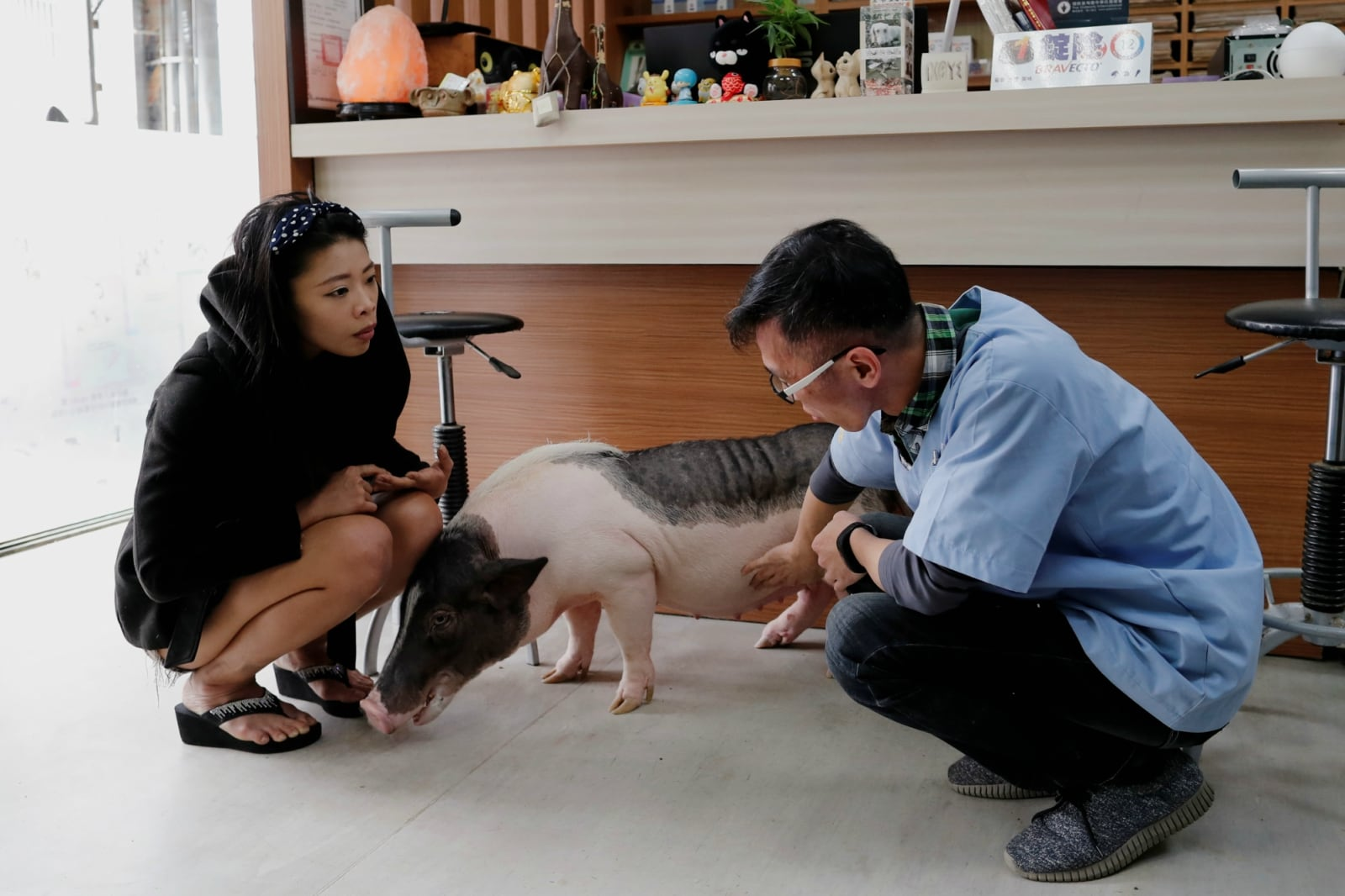 Ge Ge, a pet pig reacts near her owner Guo Sheng-Syuan and veterinarian Chang Chien-Ming during a check up at vet clinic, in Taoyuan, Taiwan January 30, 2019. REUTERS/Tyrone Siu