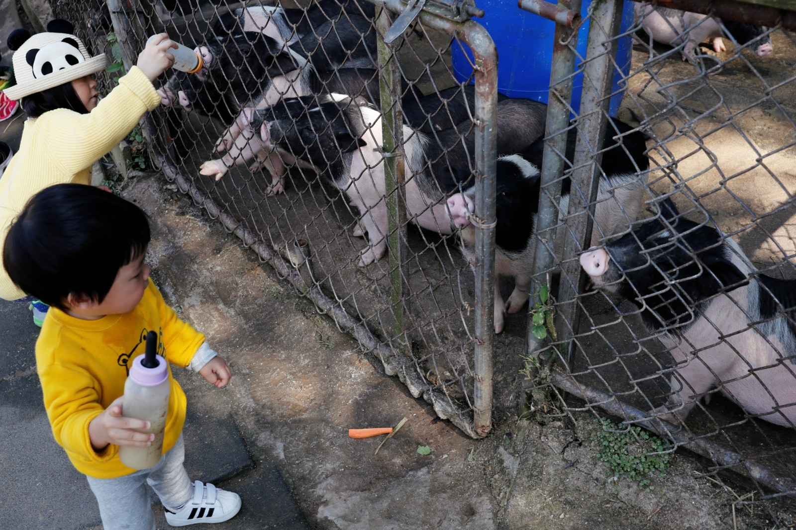Children feed piglets at an animal farm that encourages customer to buy food to feed them or buy them, in Taoyuan, Taiwan January 31, 2019. REUTERS/Tyrone Siu