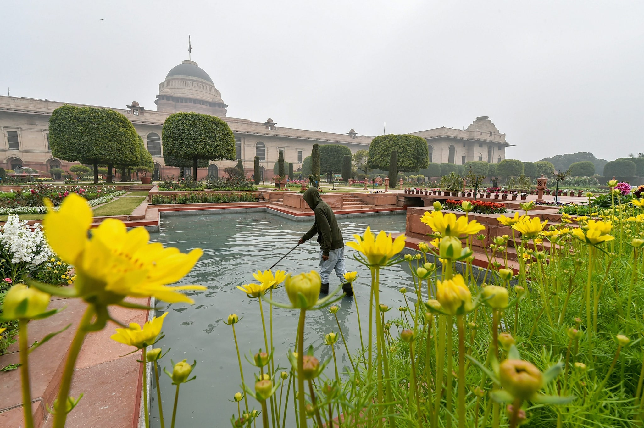 A worker cleans a pond as the flowers bloom at the Mughal Gardens of Rashtrapati Bhavan in New Delhi, Saturday, Feb 2, 2019.