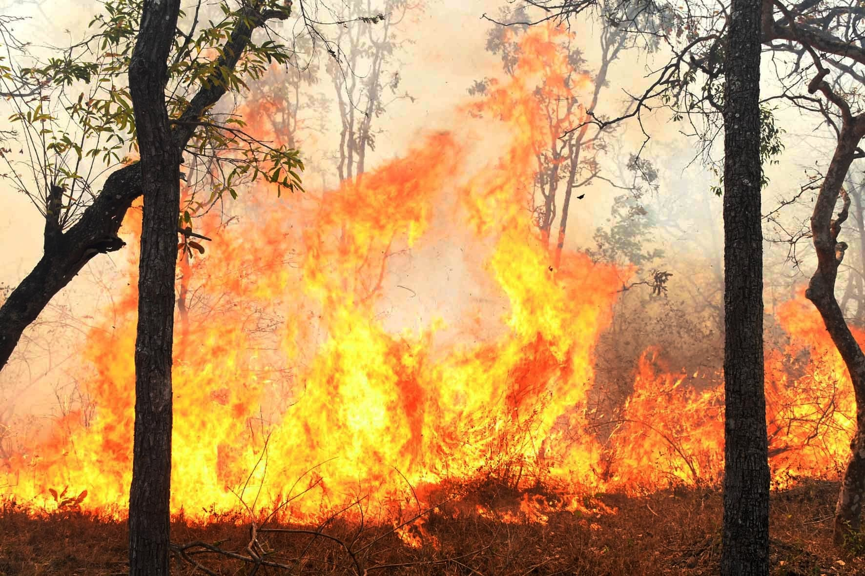A stretch of eight kilometres of forest from Varekatte to Gopalaswamy Hill has been reduced to ashes while reports said the fire has spread to Chartalakore Hill, Dummana Hill and Gouri Kallu Hill. (Photo: IANS)