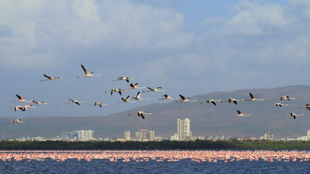 Wetlands to waste bins, Mumbai's diverse habitats house hundreds of bird species