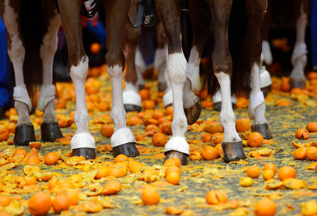Horses stand on oranges as part of Carnival celebrations in the northern Italian Piedmont town of Ivrea, Monday, March 4, 2019. (AP Photo/Luca Bruno)
