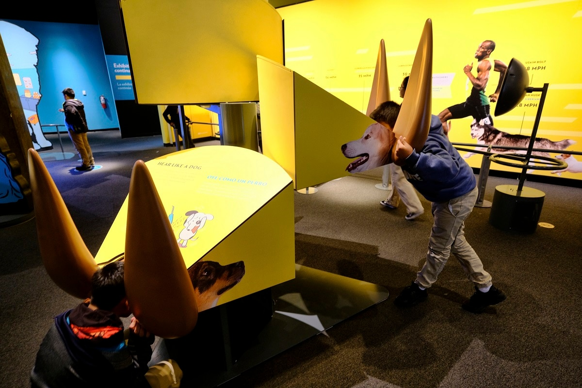 Students listen in on how a dog hears the world at an interactive display during a preview of a new exhibition. (AP Photo/Richard Vogel)