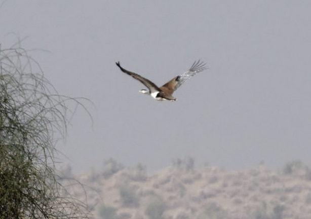The flight of a bustard