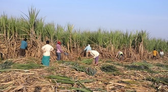 Indian sugar mills owe record $4.38 billion to cane growers