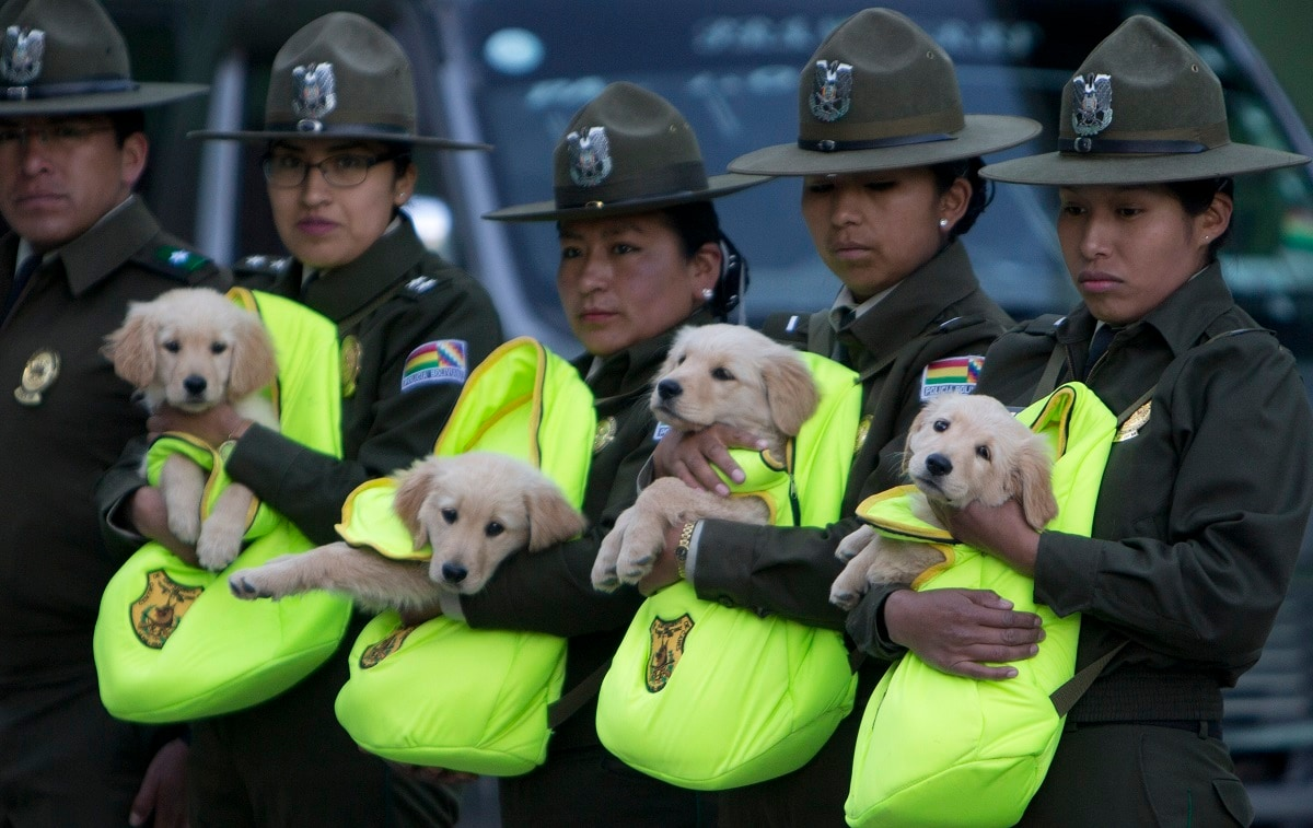 Female officers introduce a litter of Golden Retriever puppies to be trained as police dogs, during a skills presentation of the K-9 unit for the leadership, in La Paz, Bolivia. (AP Photo/Juan Karita)