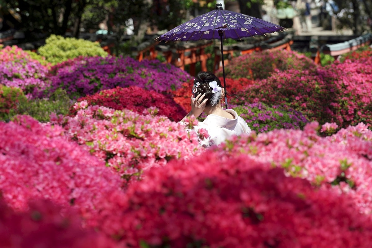 A visitor posing for a photo walks through azalea blossoms at Nezu Shrine during a day of mild spring weather in Tokyo. Nezu Shrine is one of the oldest shrines in Tokyo. (AP Photo/Eugene Hoshiko, File)