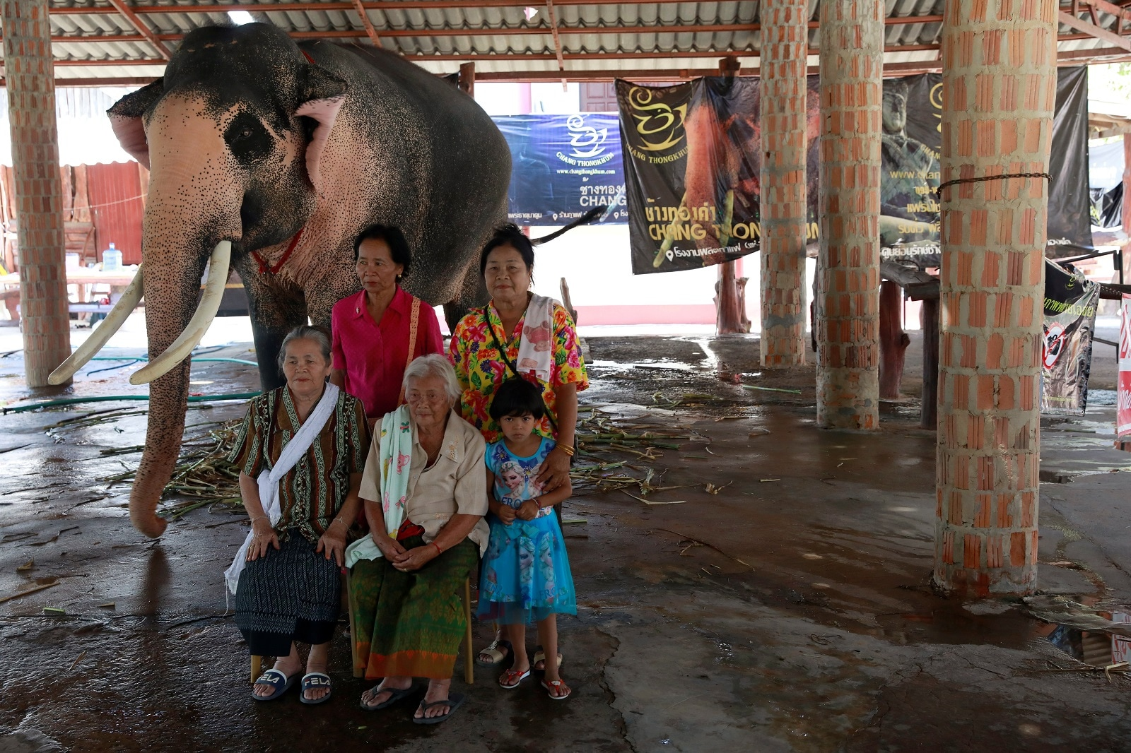 """A family has a photo taken with Plai Ekachai, 33, who will become the first """"white"""" elephant to be discovered under the reign of King Rama X, also known as Maha Vajiralongkorn, in Maha Sarakham, Thailand April 25, 2019. REUTERS/Soe Zeya Tun"""