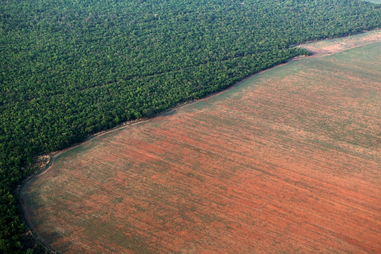 The Amazon rain forest (L), bordered by deforested land prepared for the planting of soybeans, is pictured in this aerial photo taken over Mato Grosso state in western Brazil, October 4, 2015. Picture taken October 4, 2015. REUTERS/Paulo Whitaker/File Photo