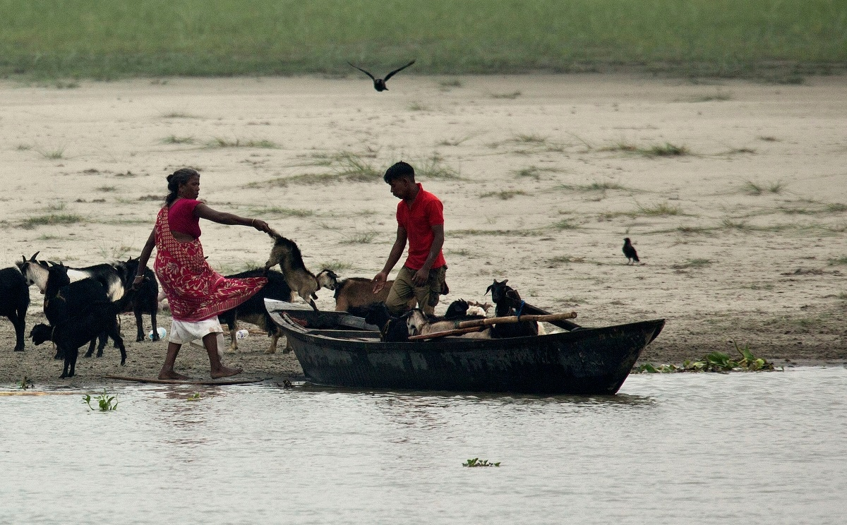 Locals shift their goats in a country boat to safer places in river Brahmaputra in Gauhati. (AP Photo/Anupam Nath)