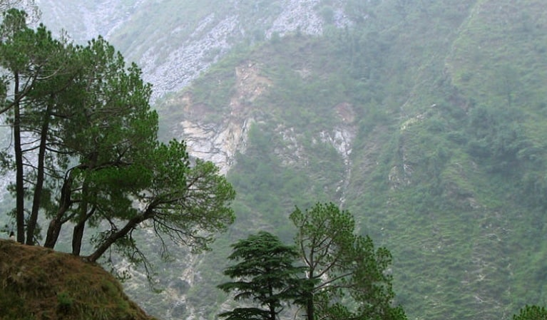 Forest fires impact typical Himalayan trees