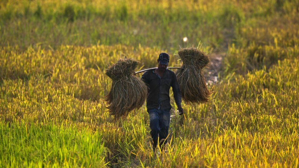 Govt reminds states on exemption norms, says farming activity allowed during lockdown