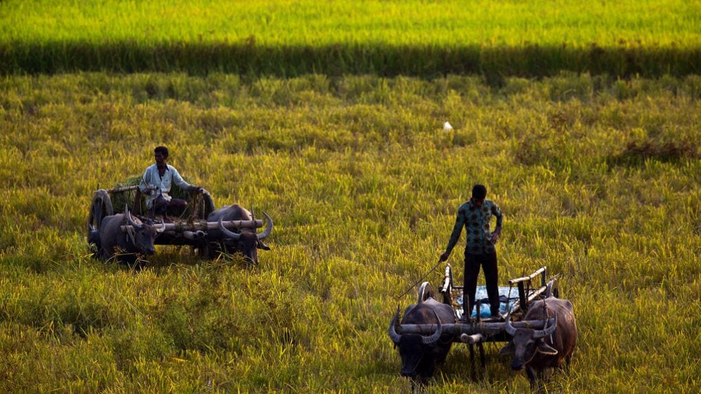 Young Turks: Govt clears key agricultural reforms, here's what it means according to experts