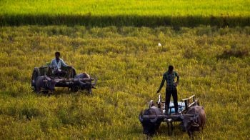 Indianomics: Will agri economy be rural India's saviour? Experts weigh in