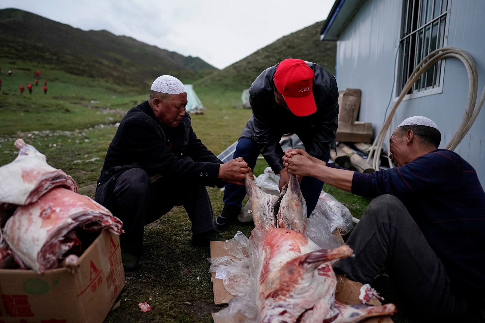 Cordyceps pickers cut up lamb carcasses at a base camp on a mountain in the Amne Machin range in China's western Qinghai province, June 7, 2019. Cordyceps pickers are hired by a local company to find and pick the Ophiocordyceps sinensis, a fungus believed to possess aphrodisiac and medicinal powers. REUTERS/Aly Song
