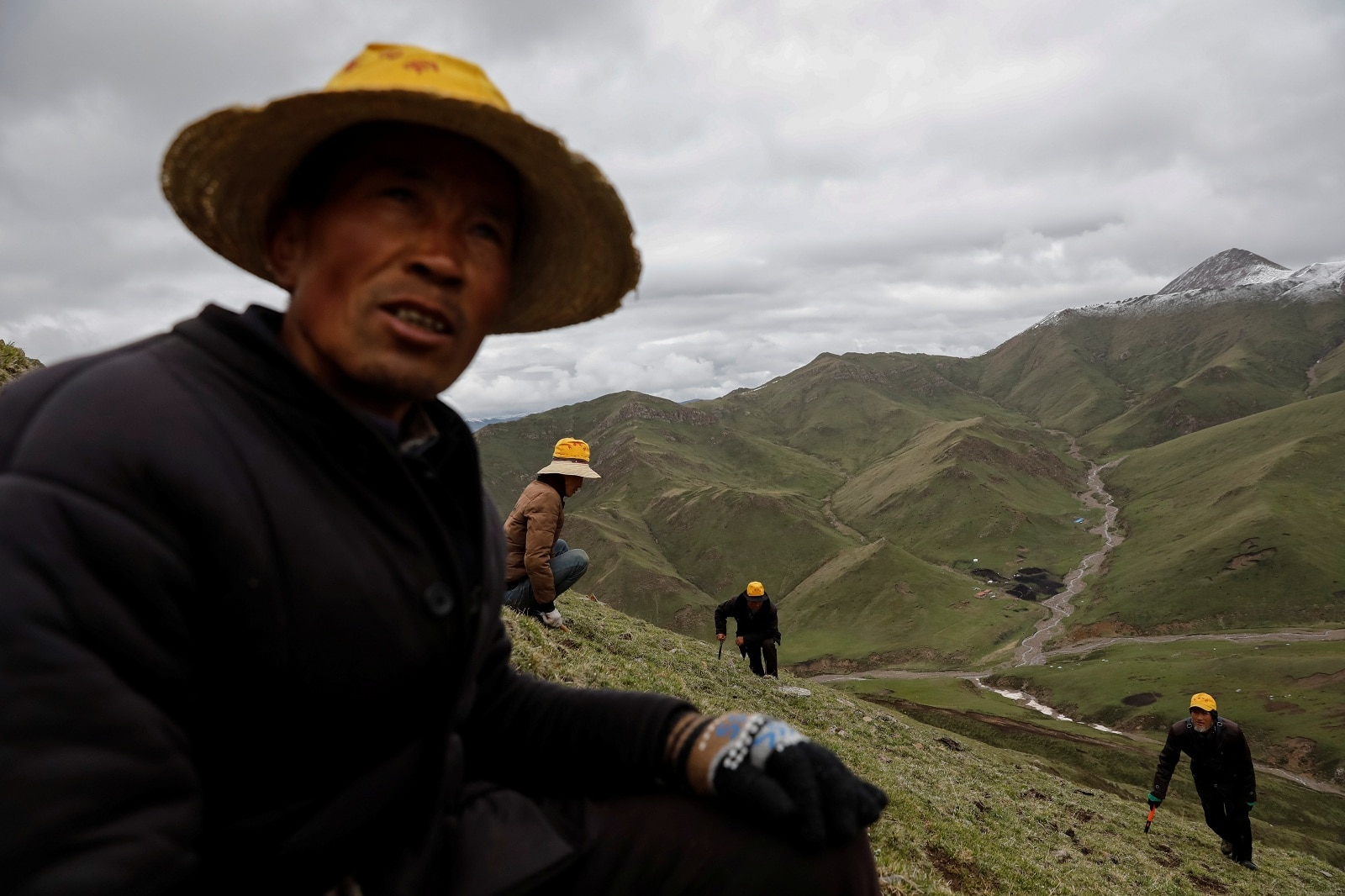 Cordyceps picker Xing Hairen, 51, looks on as others scan the ground to find Ophiocordyceps sinensis, a fungus believed to possess aphrodisiac and medicinal powers, on a mountain in the Amne Machin range in China's western Qinghai province, June 8, 2019. REUTERS/Aly Song