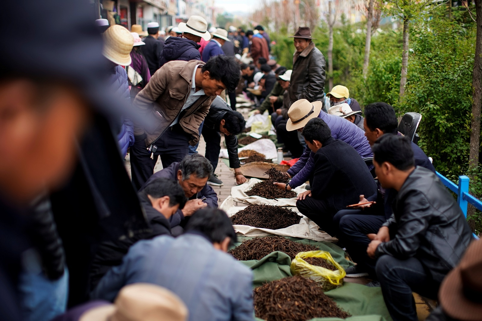 Buyers check the quality of cordyceps, a fungus believed to possess aphrodisiac and medicinal powers, at a cordyceps trade market in Hainan Tibetan Autonomous Prefecture, in China's western Qinghai province June 10, 2019. REUTERS/Aly Song