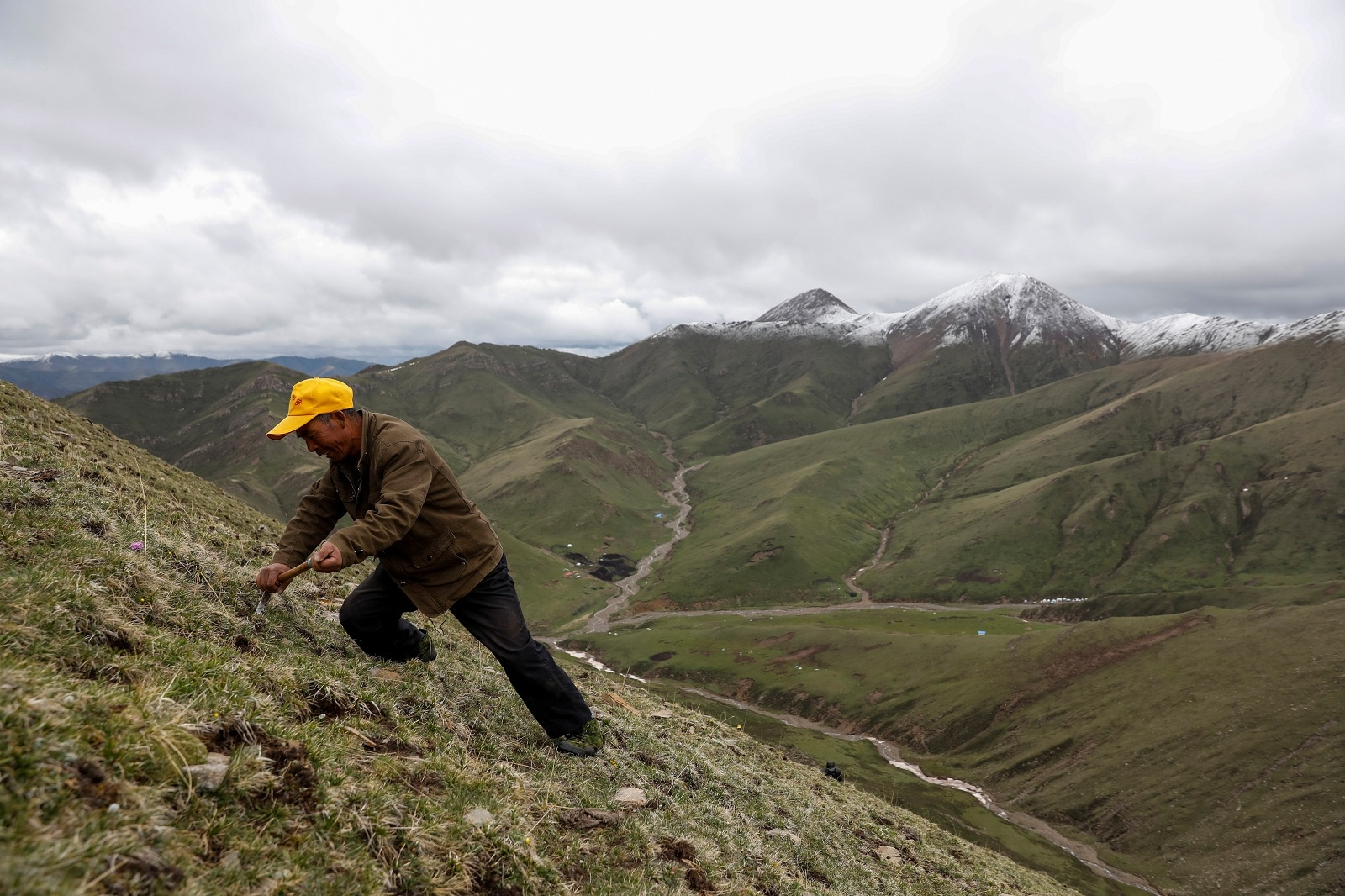 Ma Junxiao, 49, an ethnic Hui Muslim farmer from remote western China, scans the ground to find cordyceps, a fungus believed to possess aphrodisiac and medicinal powers, on a mountain in the Amne Machin range in China's western Qinghai province, June 8, 2019. Ma has been picking cordyceps in Qinghai for the past 14 years.