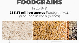 India's foodgrain production hits record high. These are the most-produced grains
