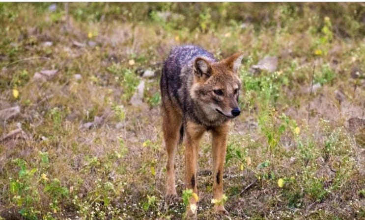 Interactions between people and wild canids in central India