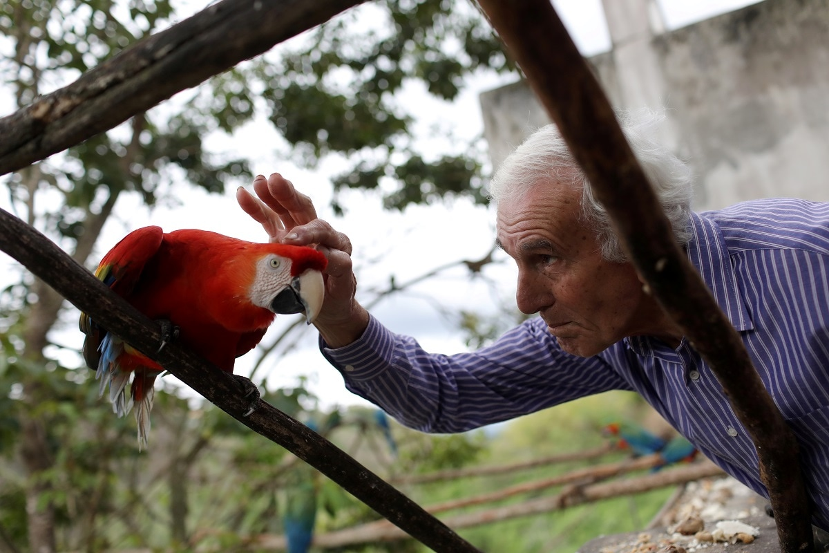 The simple contact with the increasingly people-friendly macaws, some varieties of which are threatened by animal trafficking, has become an alternative to pricey movie outings or trips to the beach that used to help people unwind. REUTERS/Manaure Quintero