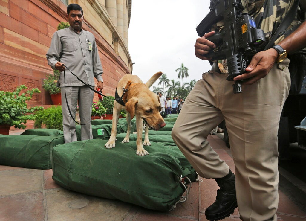 A sniffer dog checks bags containing the copies of the federal budget for the year 2019-20, that will be distributed to lawmakers at the parliament house in New Delhi, Friday, July 5, 2019. The government increased the import duty on gold and precious metals to 12.5 percent from the earlier 10 percent. (AP Photo/Manish Swarup)
