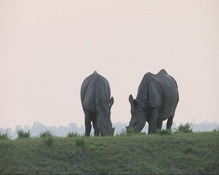 Animal fatalities rise in Kaziranga as water level recedes; flood likely to impact population growth of rhinos