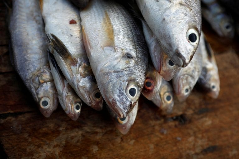 Toxic mercury in fish rising with climate change and over fishing