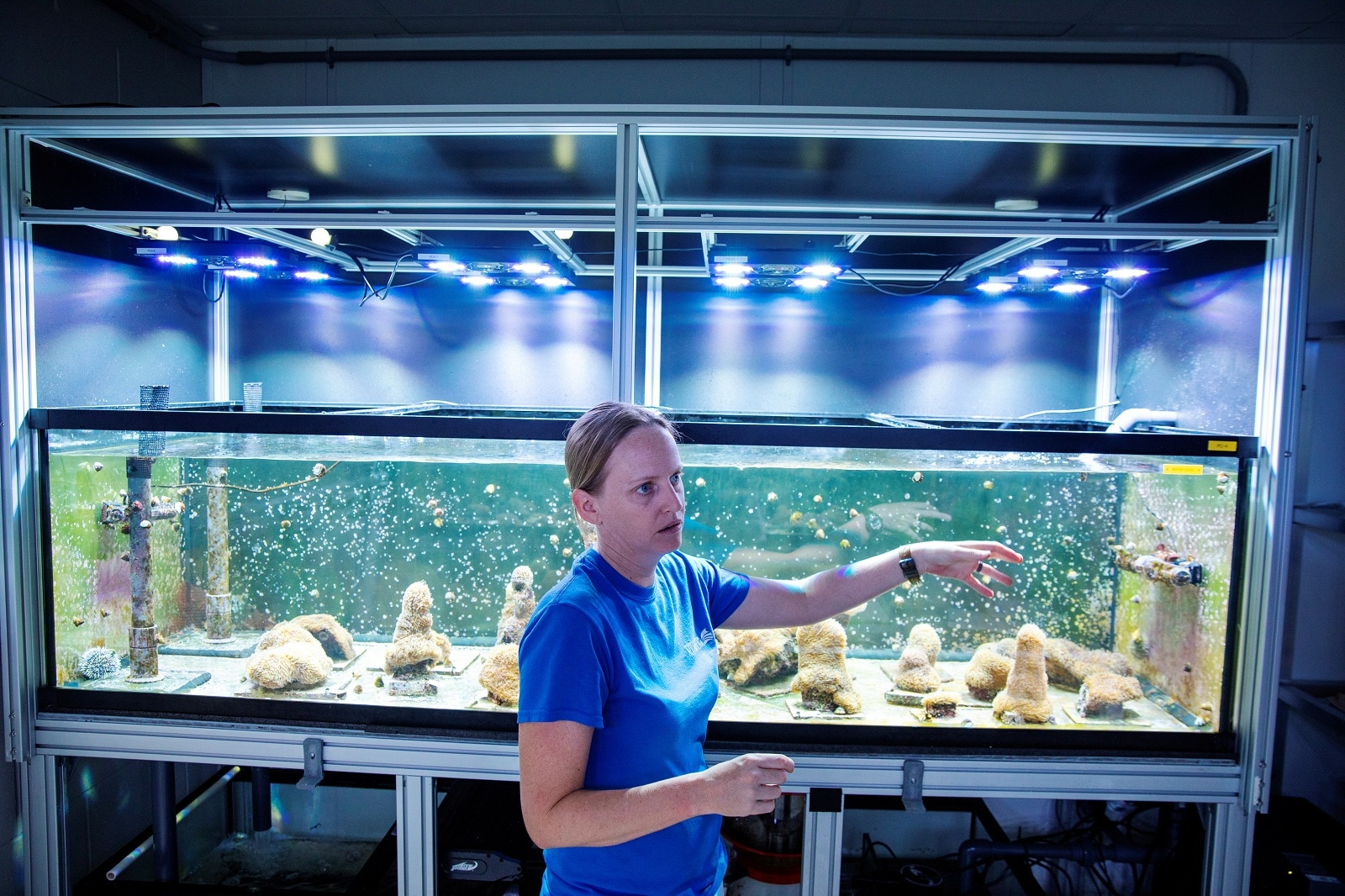Chief coral scientist Keri O'Neill gestures in front of a tank of Pillar coral (Dendrogyra cylindricus). Apollo Beach, Florida U.S., August 14, 2019. REUTERS/Lucas Jackson